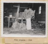 Tree Program - 1968.
