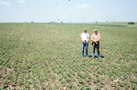 Quad District Award winners Steve and Tim Lundsgaard show off their no-till, drilled bean field.