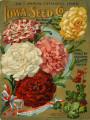 Iowa Seed Company Catalog 1905