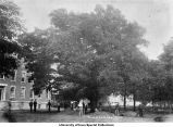Burr Oak trees removed from Pentacrest for new buildings, The University of Iowa, 1897