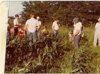 1976 - No till corn on Butch Grim Farm