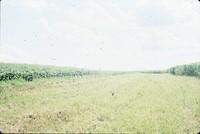 Gary Otto farm.