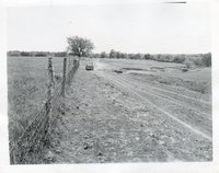 Photograph Of Dirt Road With Cattle