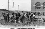 Men digging trenches south of Armory, The University of Iowa, 1917