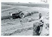 Floyd Peters meadow strips, 1967