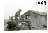 Bruce Phim and Marvin Cormick delivering trees, 1959