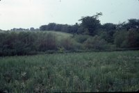 Wild grasses and trees on an unidentified pasture, 1983