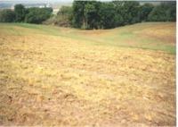 Busch's full flow, 1996