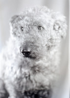 Carl Wildi's Dog Sandy