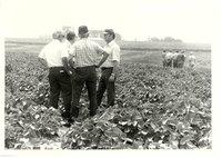 Harold Beichley farmland