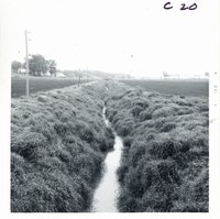 Cut creek channel embankment stabilized with Reeds canary grass on Stuart Wilson farm, 1969