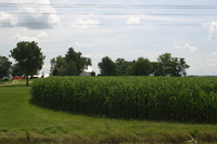 Contoured cornfield with farm in background