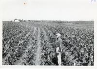 Bausch farm, 1961