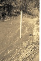 Tall Drainage Pipe Stands in Water