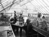 Students are examining plant specimens with microscopes  in the greenhouse, 1930