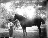 AG 247  Man with stallion