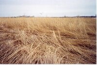 2001 - Before wetland Project on Charles Poisel Property
