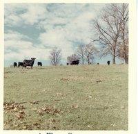 Gerlach pasture in November, 1968