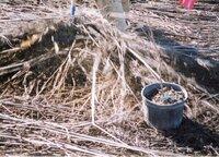 2002 - Planting trees at Brockway LLLP