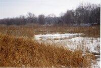 1998 - Wetlands Preserved on Wilma Groe's property