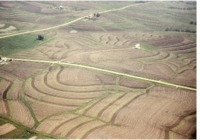 Noonan farm buffer strips