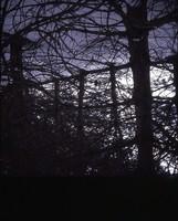 Hog farm windbreak.