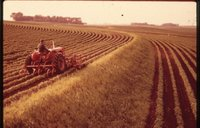 Farmer On Tractor Cultivating Bean Field