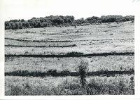 Deep creek bottom on Cornelius Theines land after tiling, 1962
