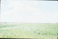 Crop rows.