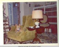 Corgy sitting in chair in parlor looking left