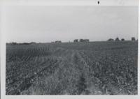 Contour Field on Norman Huse's Farm.