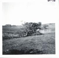 Blasting tree, 1968