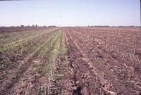 Fallow field, 1984