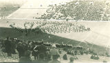 Marching band and Scottish Highlanders performance at football game, The University of Iowa, October 1938
