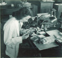Woman inspecting a small box of plant specimens, The University of Iowa, 1950s