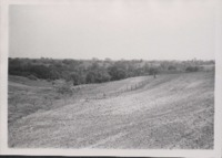Newly Constructed Terraces on D.H. Murray's Farm .