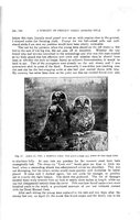 027_A History of Certain Great Horned Owls