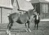 Dale Klingsmith and Belgian draft horse, 1930