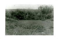 J.W. Robertson Farm, 1959